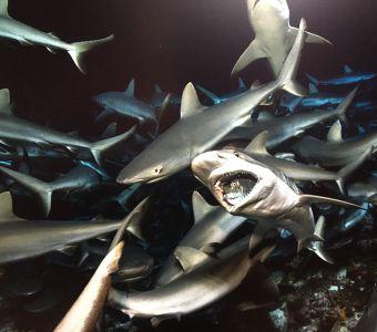 700 Requins dans la Nuit et le spationaute des fonds marins