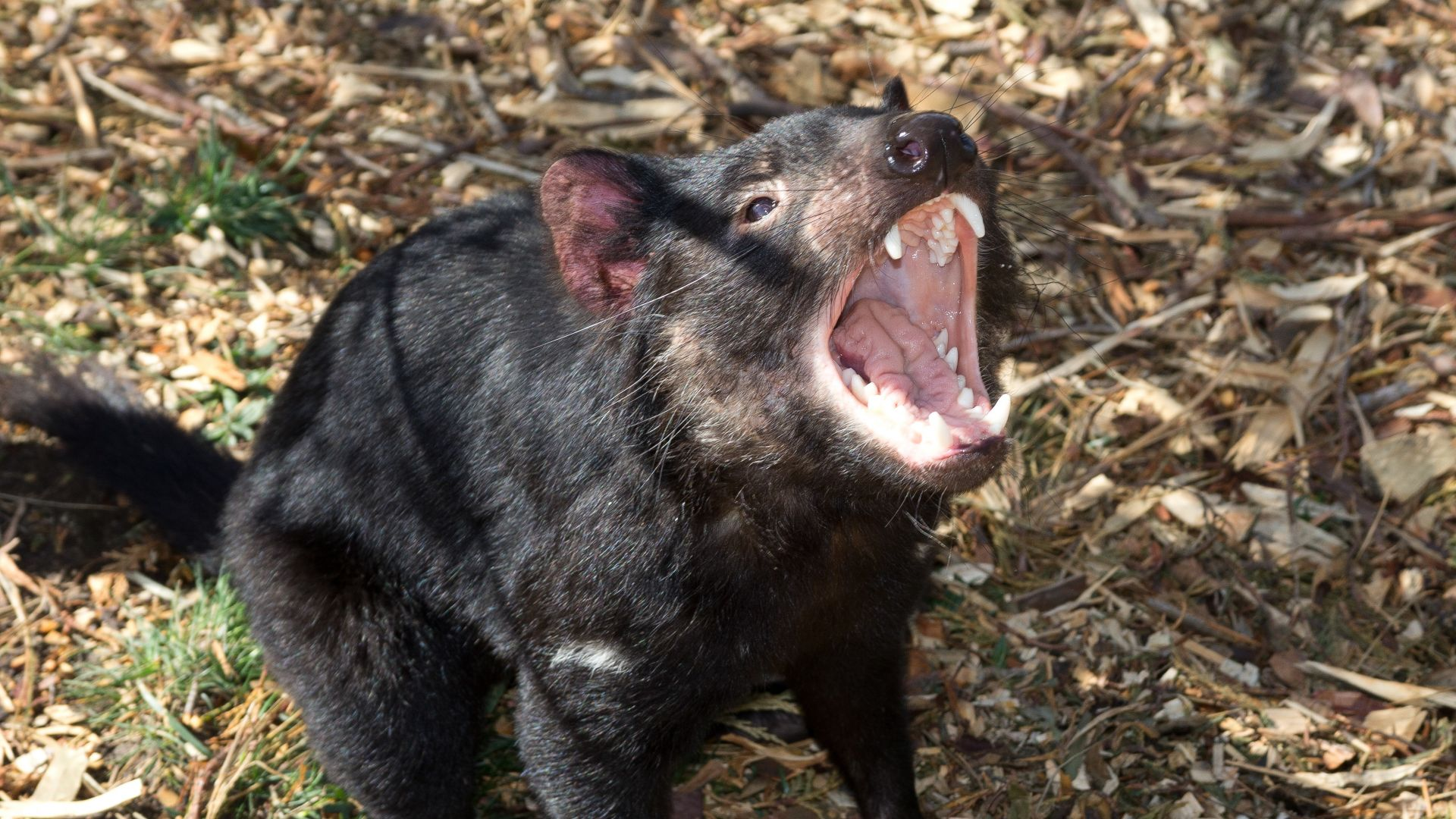 Tasmanie site de rencontrePeoria il Speed datation