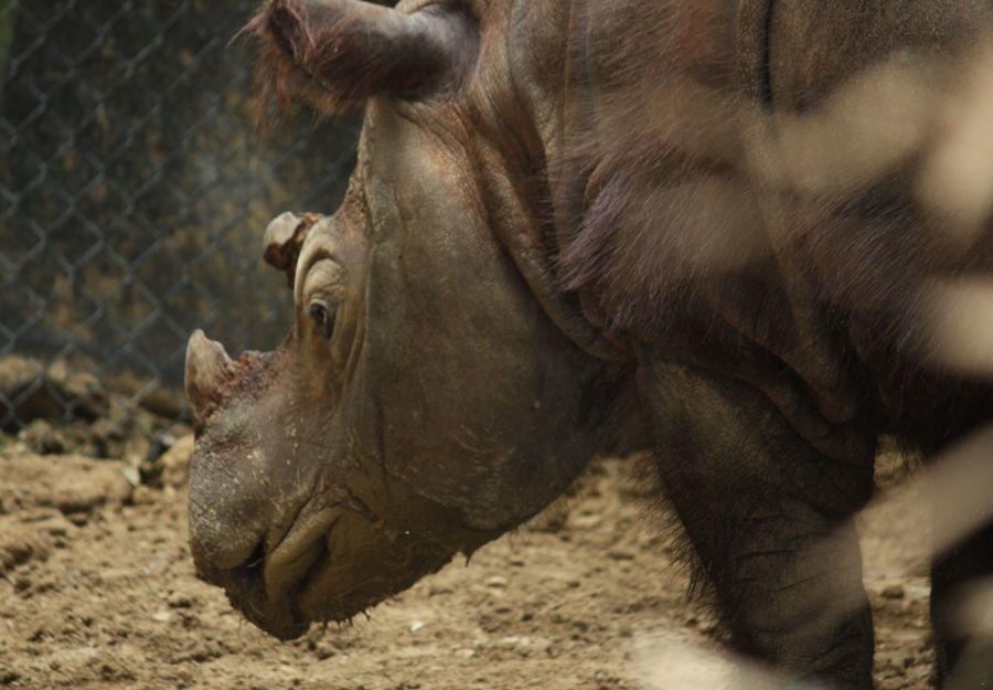 Le petit frere des rhinos en sursis - Image 2