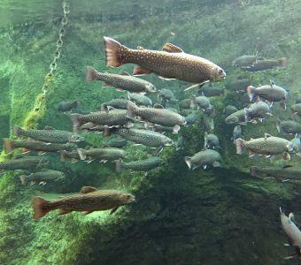 Anigaïdo recommande ! Le Grand Aquarium de Touraine près d'Amboise (37)