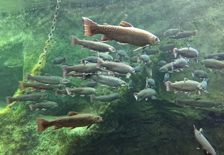 Anigaido recommande ! le grand aquarium de touraine pres ... - Image 2