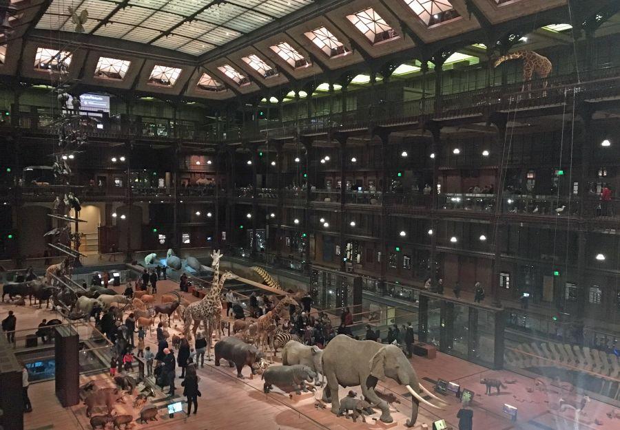 Anigaido recommande ! la grande galerie de l'evolution (75) - Image 2