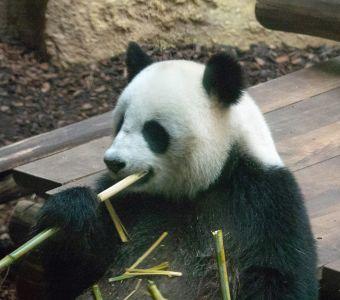 Anigaïdo recommande ! Le ZooParc de Beauval (41)