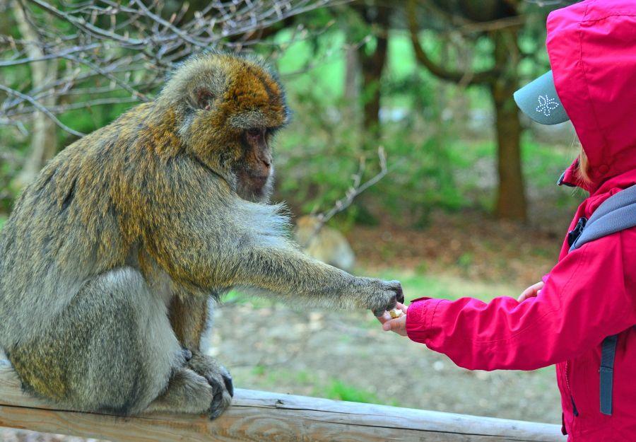 La rentree des animaux : la rubrique kids nouvelle formule ! - Image 2