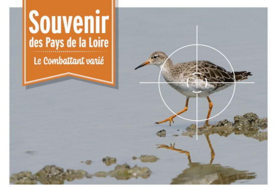 Campagne de la LPO contre la chasse du combattant varié
