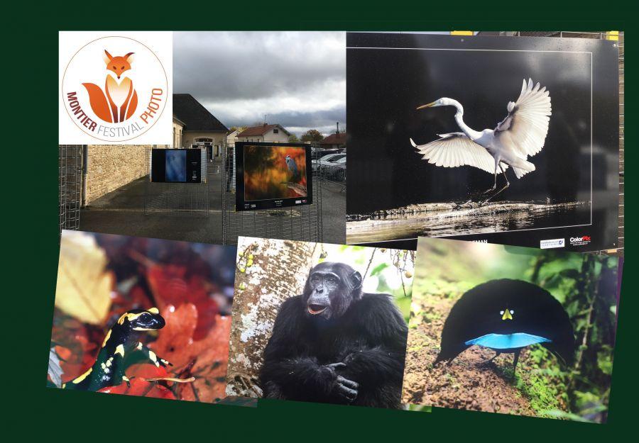Festival photo montier 2019 : bilan et coups de coeur - Image 2