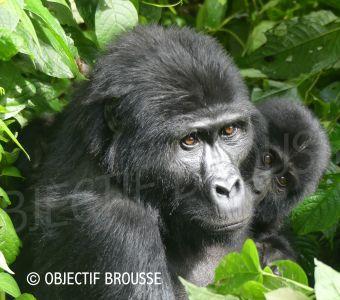 TEMOIGNAGE : URGENCE AU CONGO