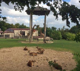 Amnéville, Pont Scorff, Krefeld : actus des parcs animaliers