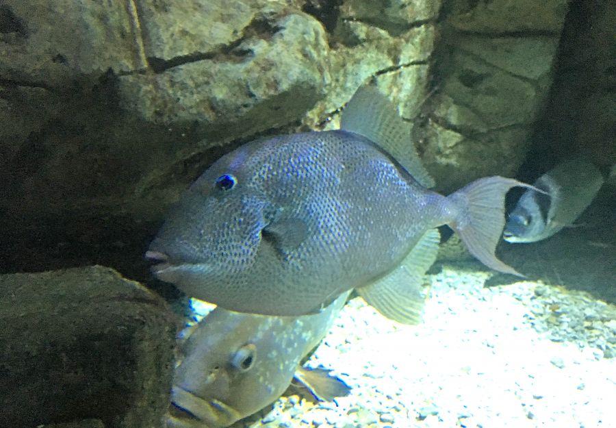 Le mystere du poisson-mordeur de saint-raphael - Image 2