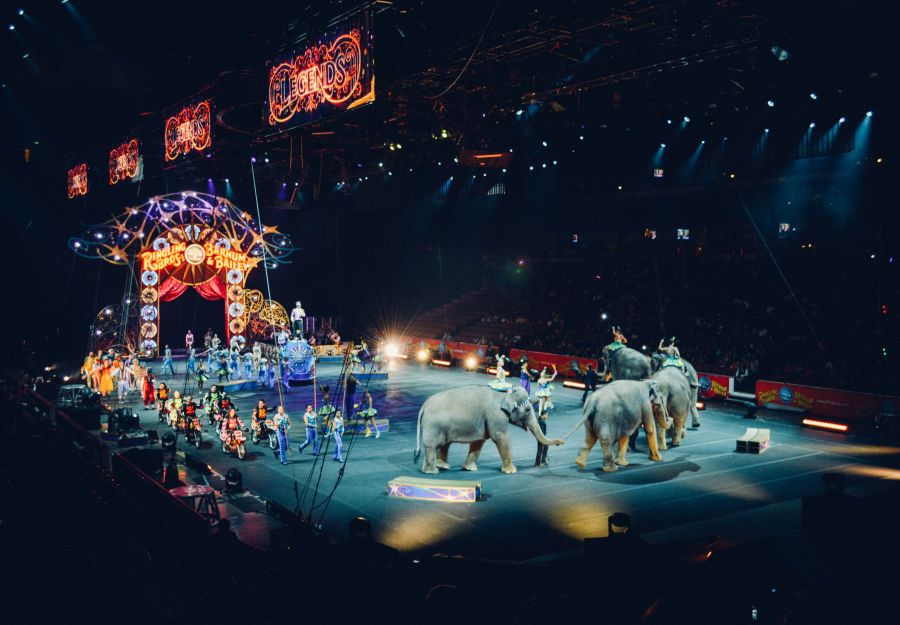 Vers la fin des animaux sauvages dans les cirques itinerants - Image 2
