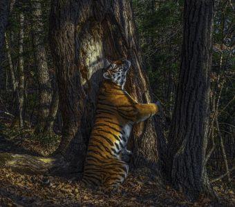 LES PLUS BELLES PHOTOS ANIMALIERES ET NATURE DE 2020