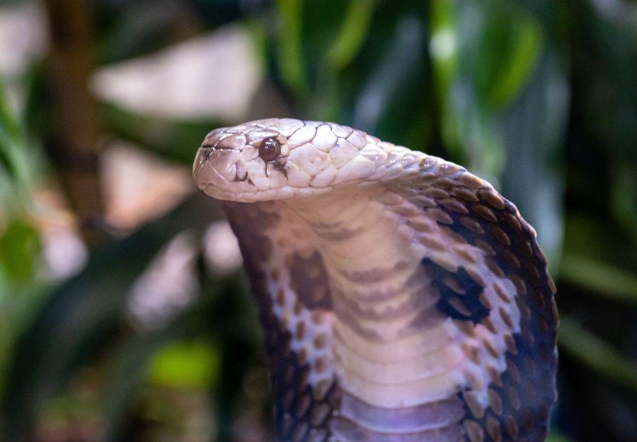 Nouvel article : les amphibiens, reptiles et serpents ve ... - Image 2