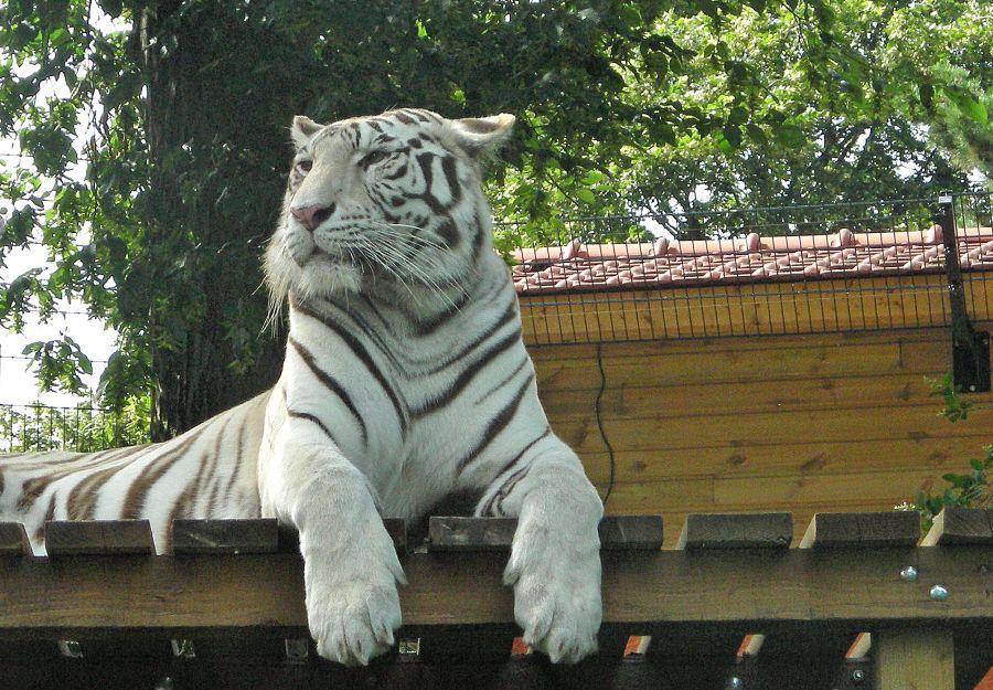 17 nouvelles fiches animaux a decouvrir sur anigaido - Image 2