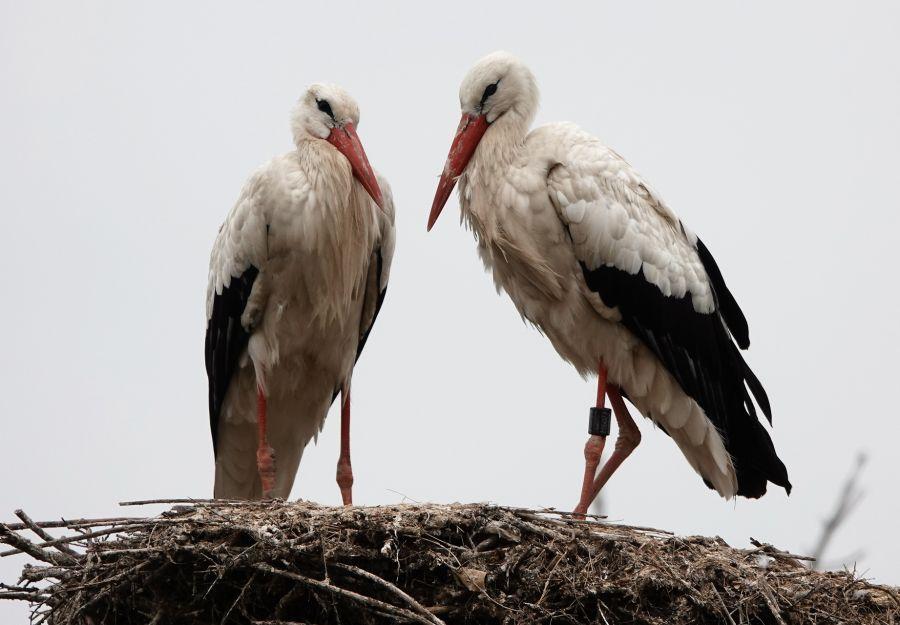 Incroyables oiseaux migrateurs ! - Image 2
