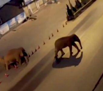 DES ELEPHANTS SEMENT LA PAGAILLE EN CHINE !