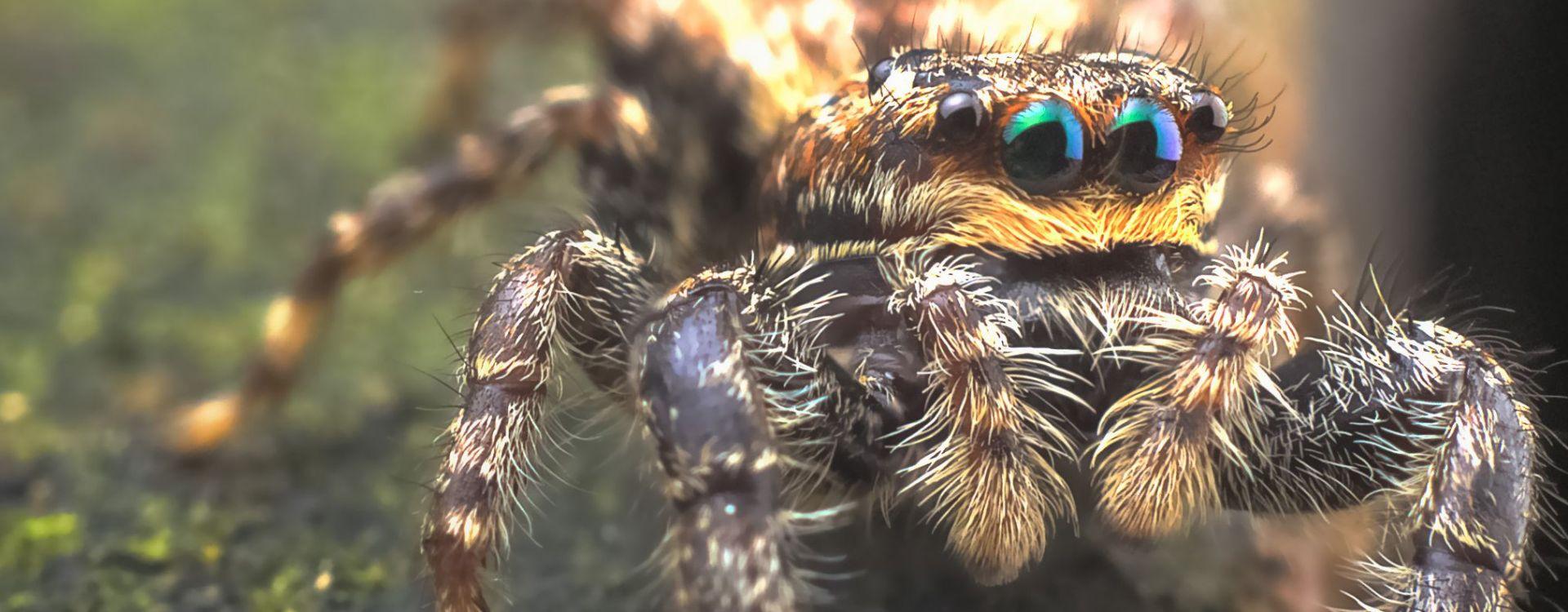 A hauteur {d'araignée !}