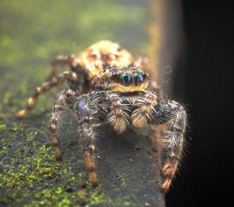 Gros plan sur les araignées de nos maisons et jardins