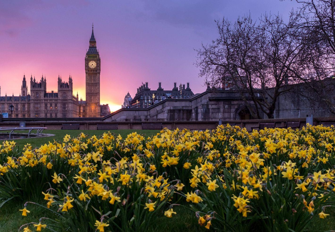 Un massif de fleurs à Londres