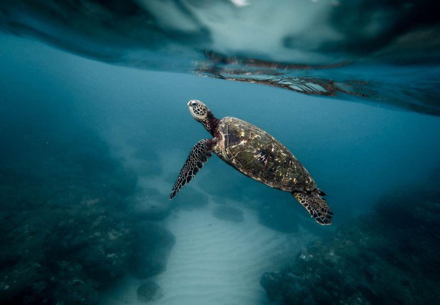 Une tortue de mer dans l'océan