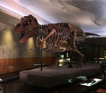Une visite à remonter le temps au Musée Field de Chicago