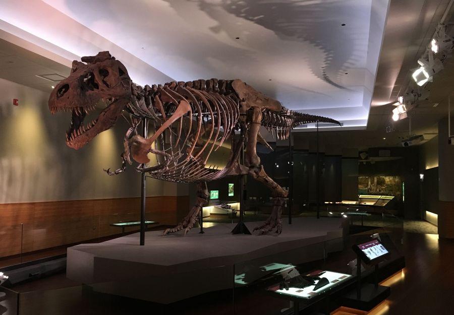 Photo de Sue le T. rex au Field Museum de Chicago - Julien PIERRE