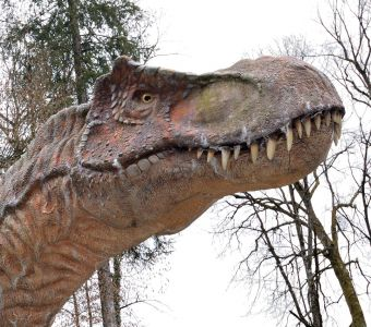 PREHISTOQUIZ Dinosaures et Préhistoire