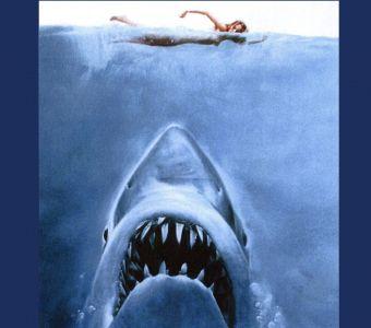 Sharkoquiz spécial requins