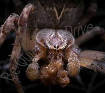 Spider-Quiz !