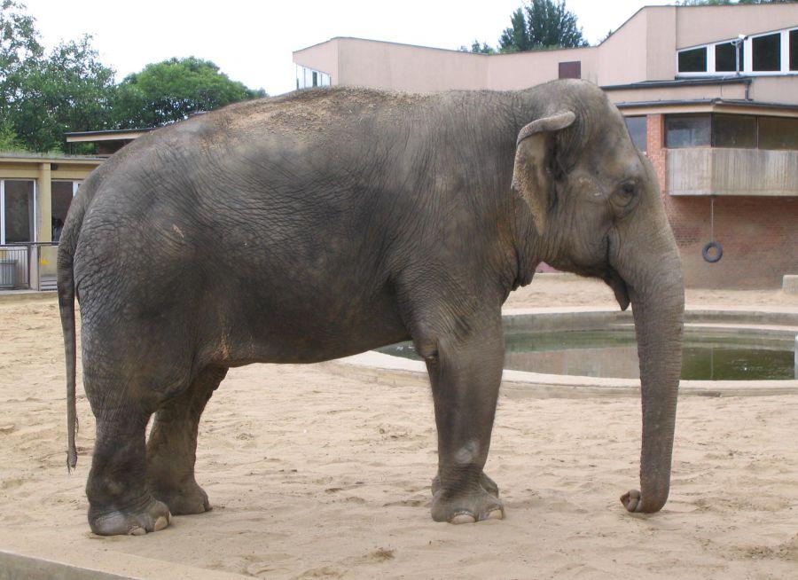 Photo d'un éléphant d'Asie par Julien PIERRE