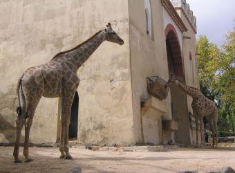 Photo de deux girafes par Julien PIERRE