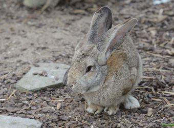 Photo d'un lapin par Thomas PIERRE
