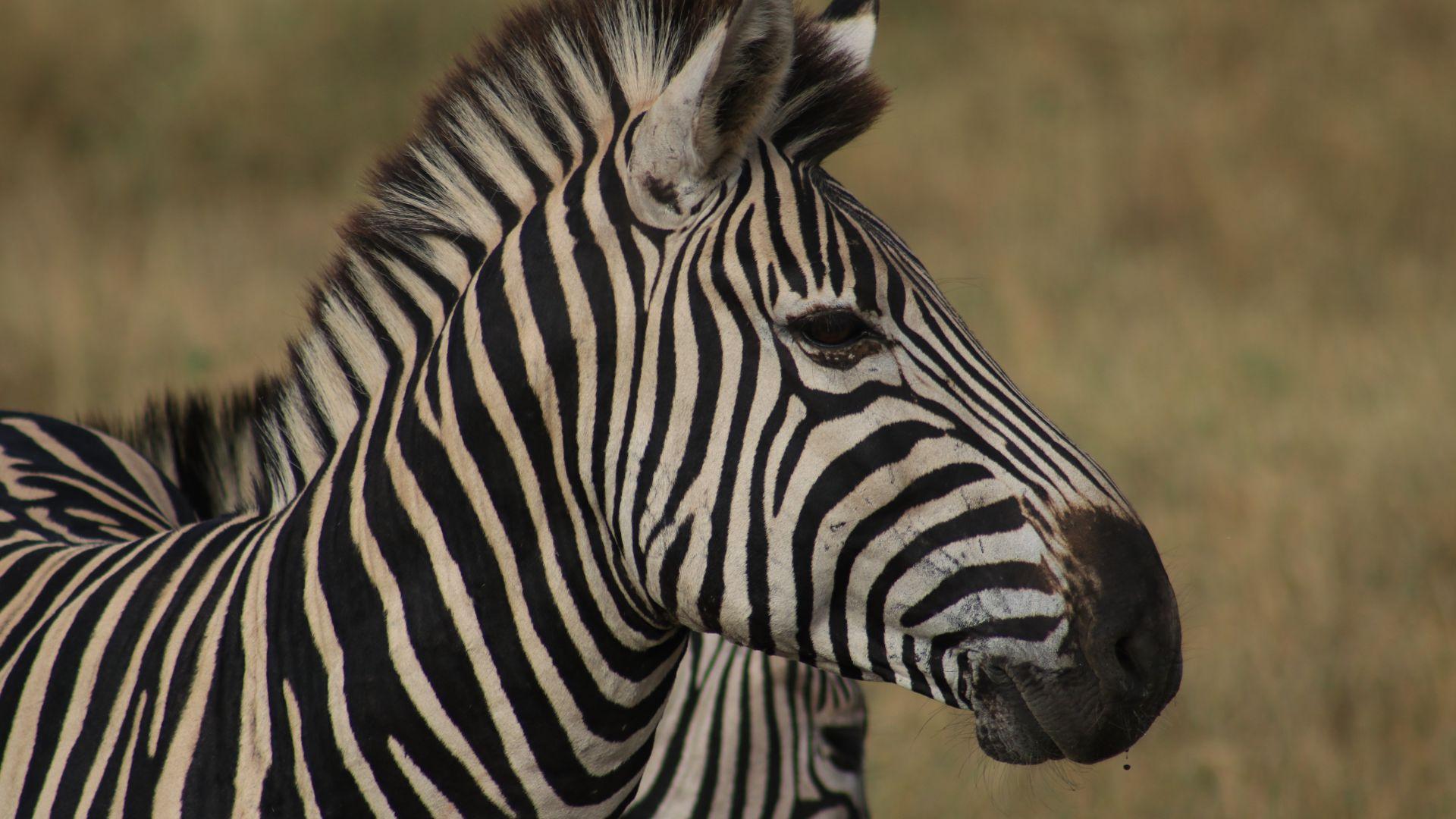site de rencontre pour zebres)