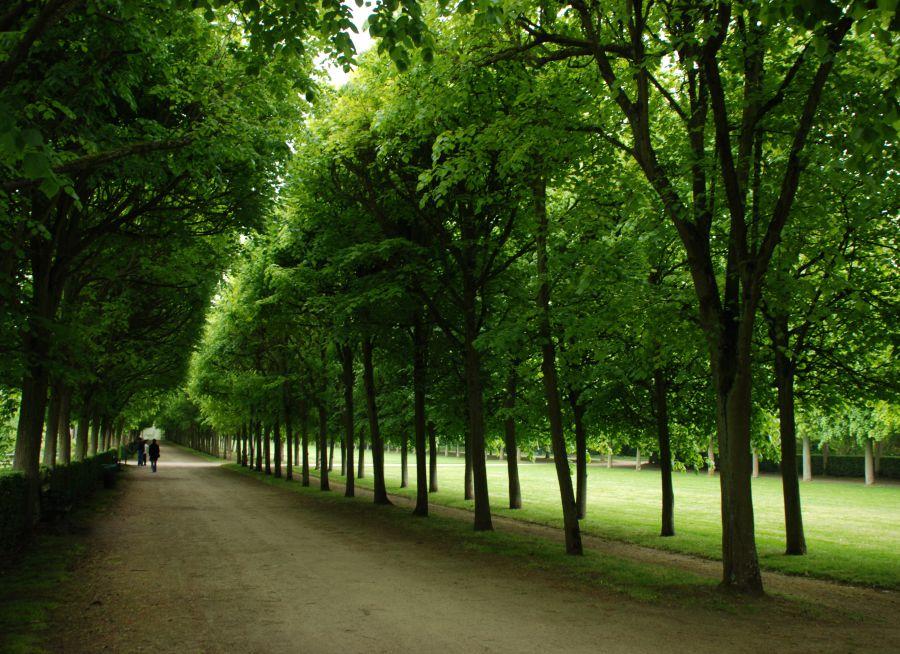 Image d'une allée boisée des jardins du château de Compiègne dans l'Oise