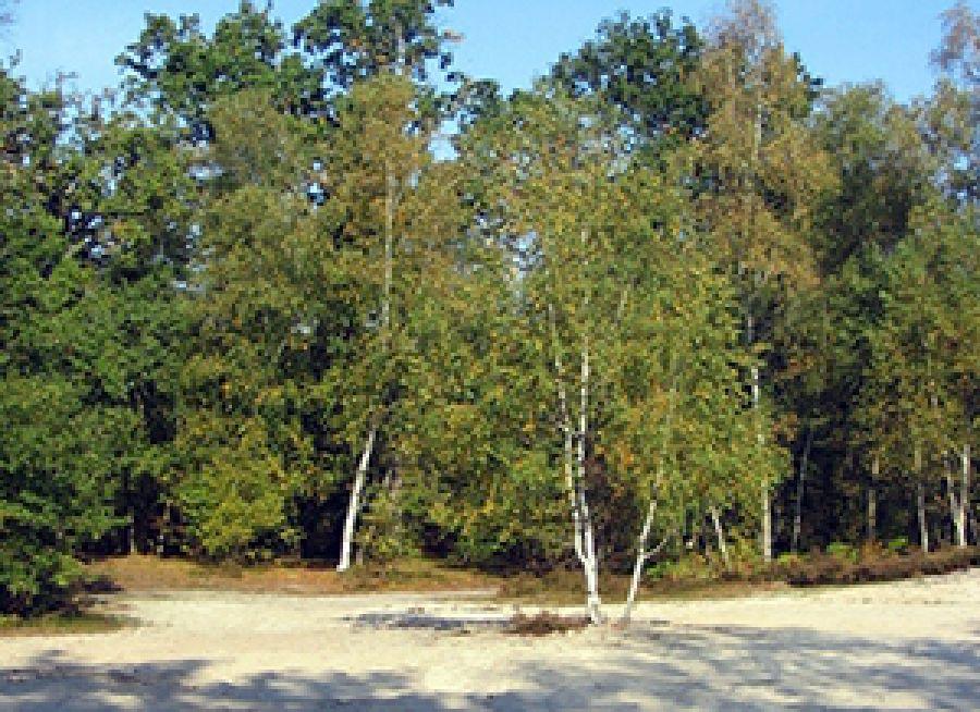 Photo d'une clairière sableuse dans la Forêt d'Ermenonville dans l'Oise