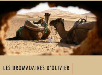 Photo LES DROMADAIRES DE PICARDIE
