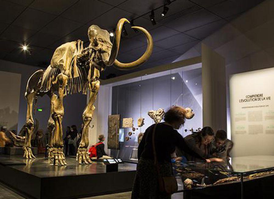 Photo d'un squelette de mammouth au Musée des Confluences de Lyon dans le Rhône