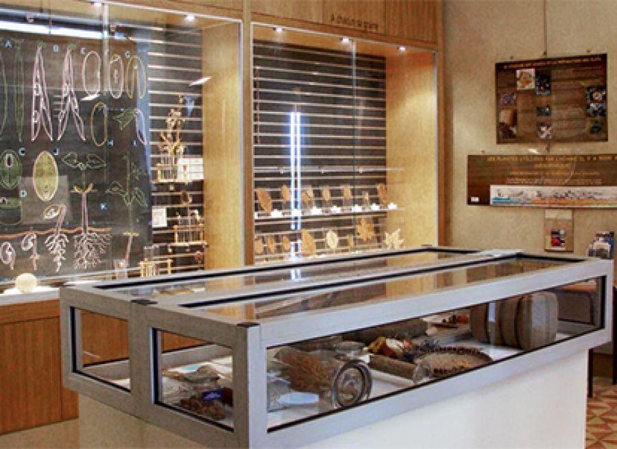 Photo des collections du Muséum d'Histoire Naturelle de Gray en Haute-Saône