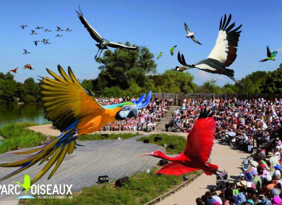 Photo du spectacle d'oiseaux en vol du Parc des Oiseaux à Villars-les-Dombes dans l'Ain