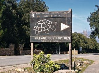 Photo LE VILLAGE DES TORTUES