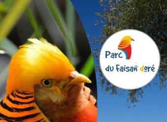 Photo PARC DU FAISAN DORE